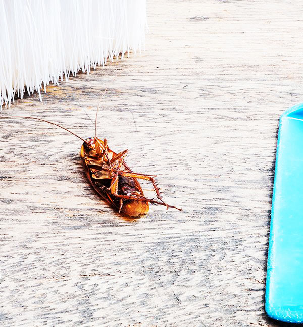 Roach Control In San Angelo, TX