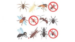 Information Of Pest Control Measures